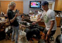 Pareja resguarda 46 animales durante tormenta