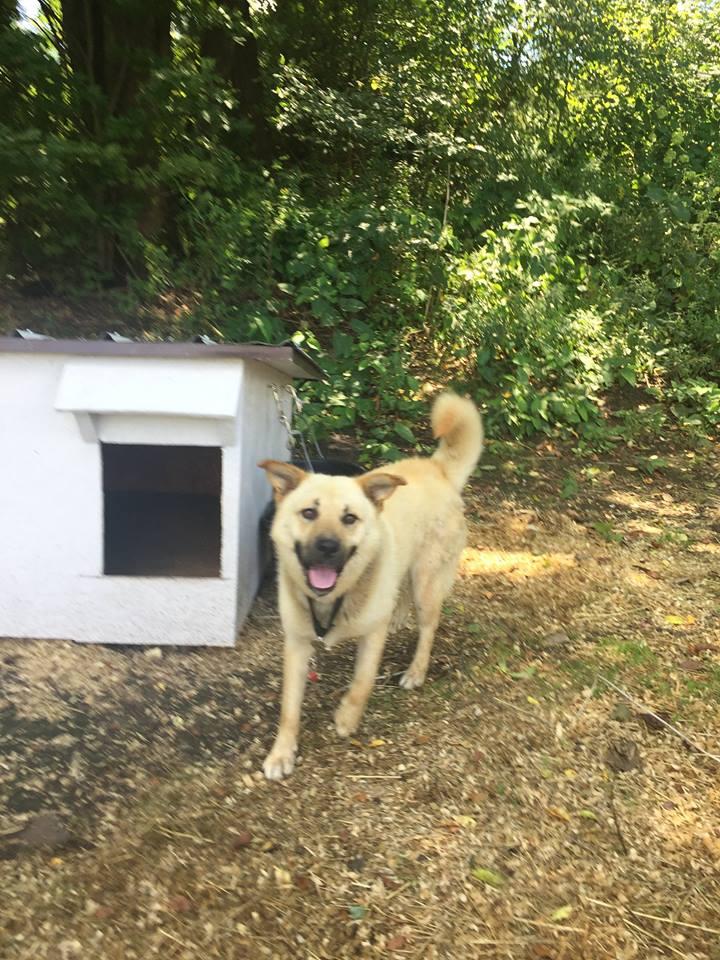 Peanut y su nueva casa