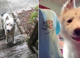 Perrita buscaba refugio antes del huracán y encontró un hogar