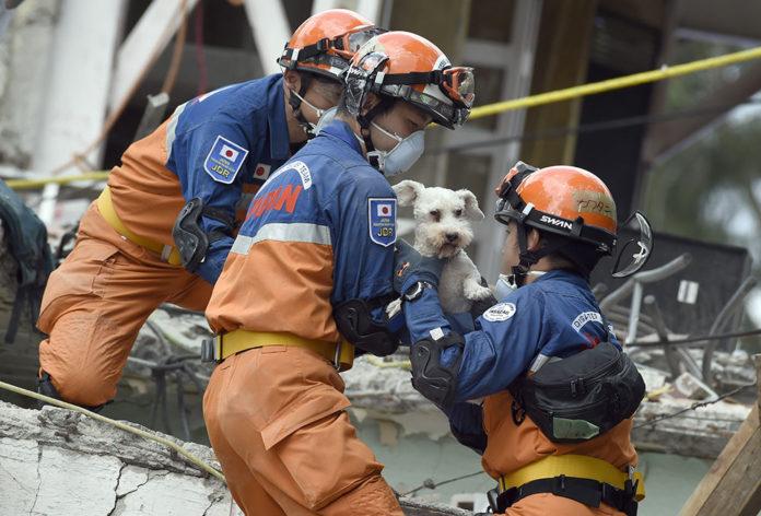 Perro atrapado 5 días bajo escombros