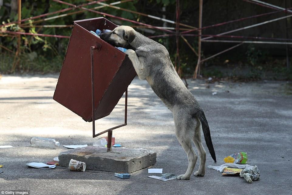 Perro busca comida