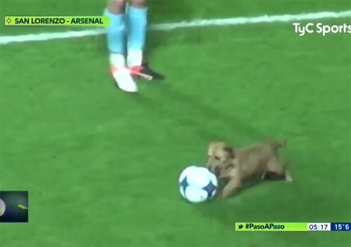 Perro con el balón