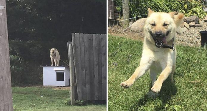 Perro corre por primera vez después de una vida encadenado