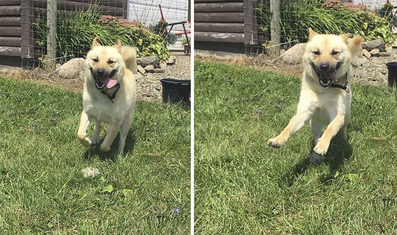 Perro corre por primera vez