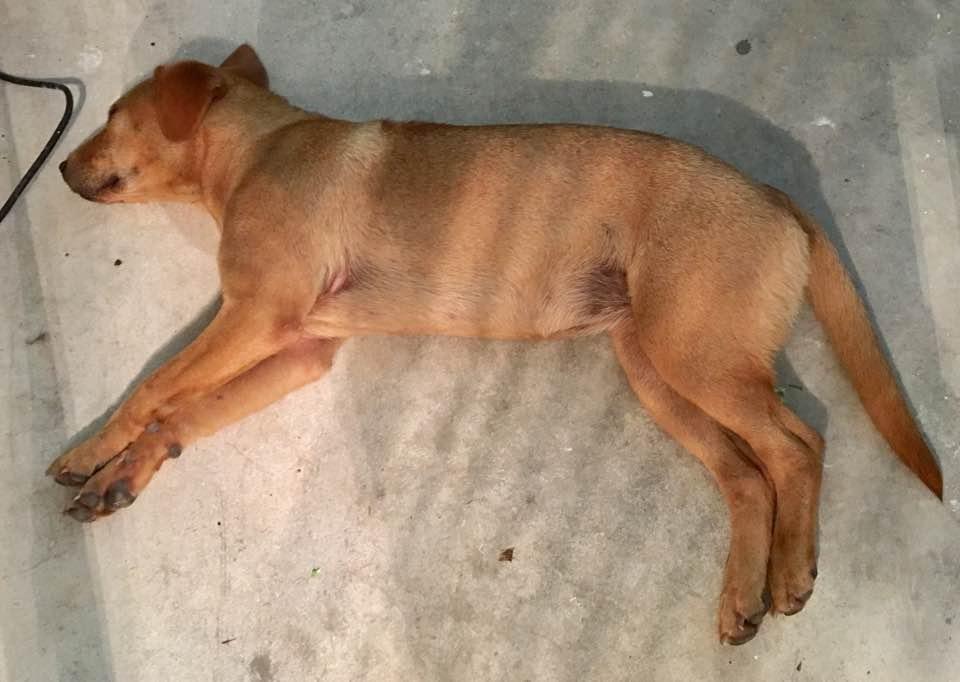 Perro descansa después de la tormenta