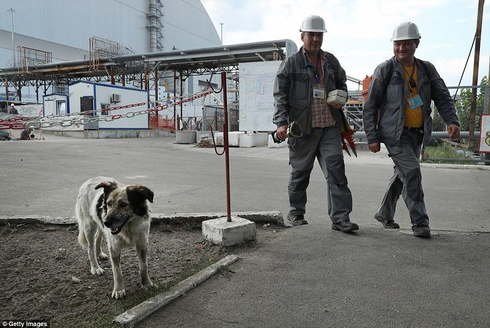 Perro en planta nuclear