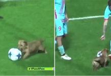 Perro interrumpe partido de fútbol