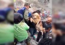 Perro rescatado entre los escombros del terremoto en México