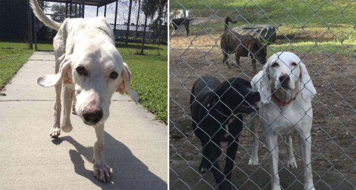 Perro volvió al refugio mas de 10 veces