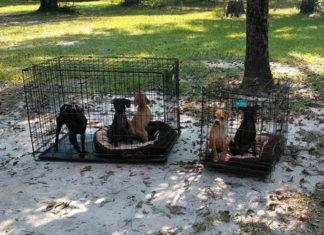 Perros abandonados durante el huracán Irma