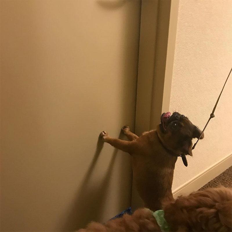 Perros en hotel