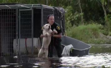 Perros encadenados en la tormenta