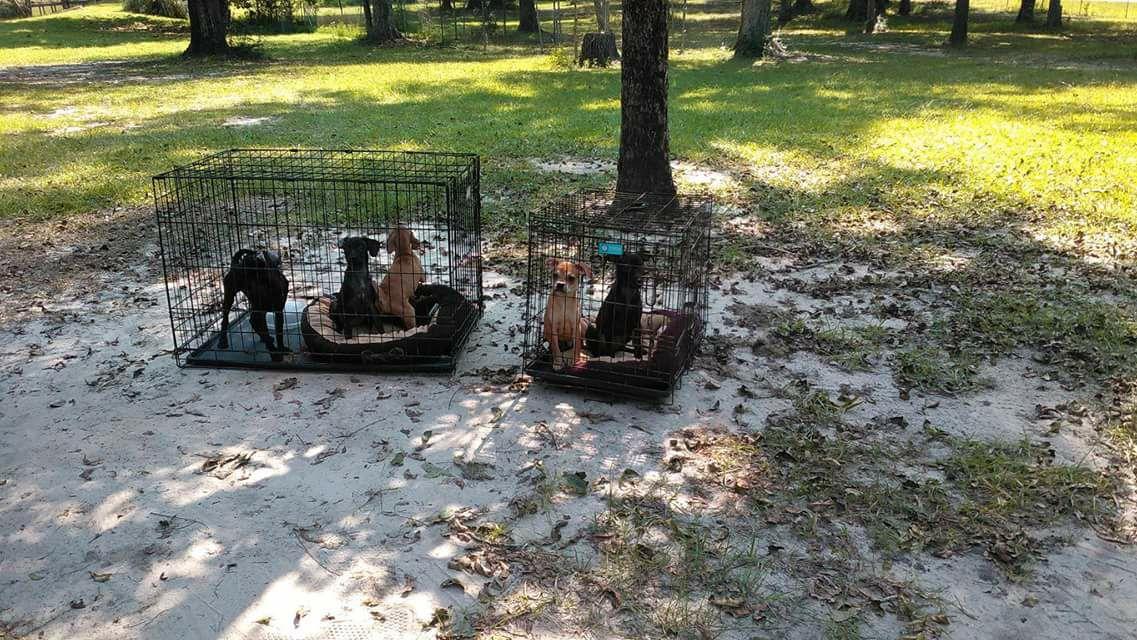 Perros enjaulados abandonados durante tormenta