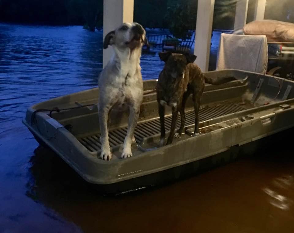Perros flotando