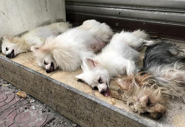 Perros intervenidos