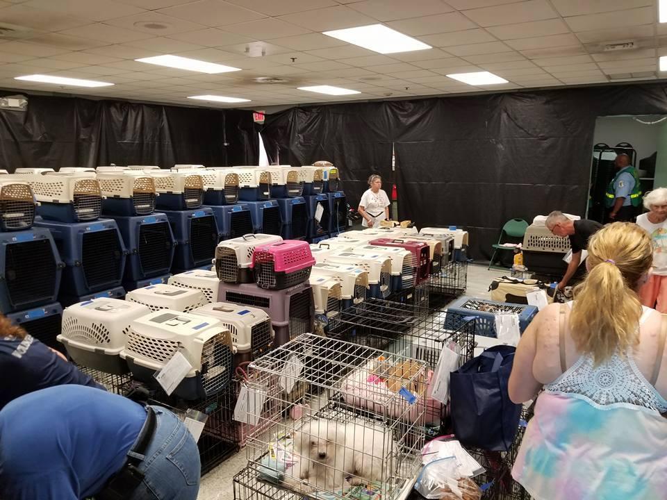 Perros refugiados del huracán