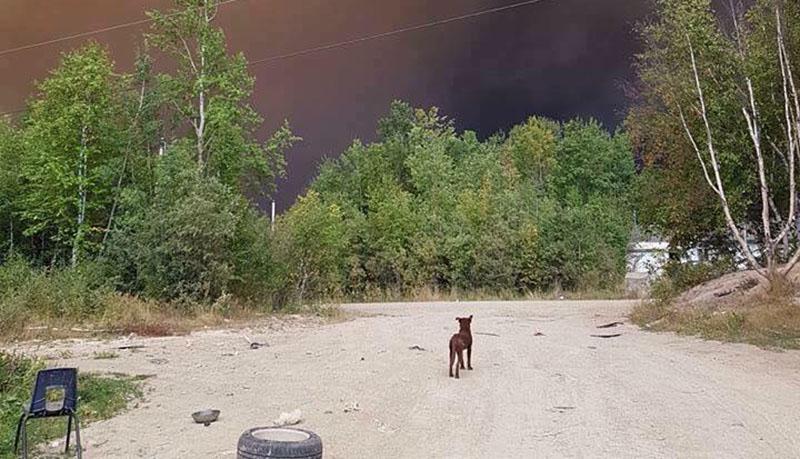 Personas ayudan animales en incendios forestales