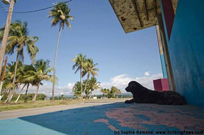 Playa del perro muerto