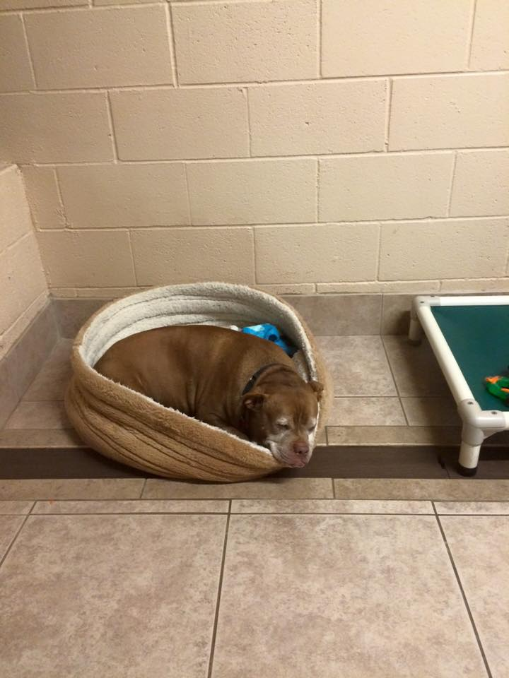 Princess deprimida en la perrera