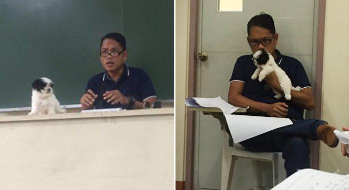 Profesor de universidad lleva a sus perros a clases