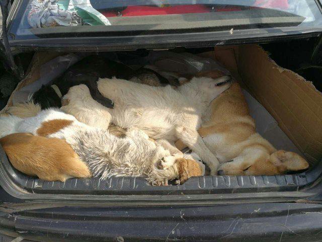 Propietario de restaurante chino roba y asesina 8 perros