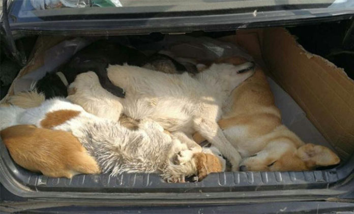 Propietario de un restaurante asesina a 8 perros