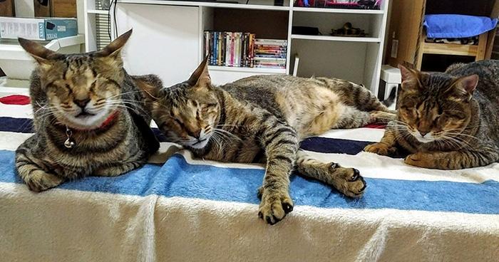 Tres gatos amorosos