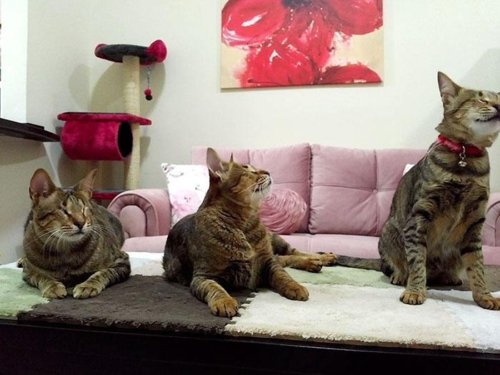 Tres gatos ciegos