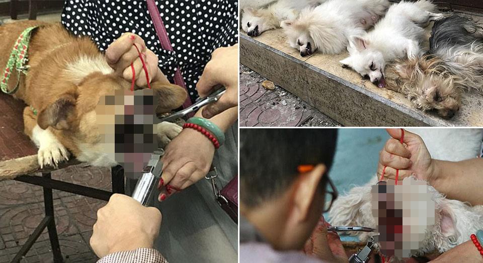 Veterinario chino corta cuerdas vocales a docenas de perros