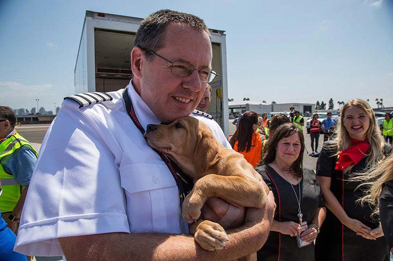 Vuelan con cabina llena de perros y gatos rescatados