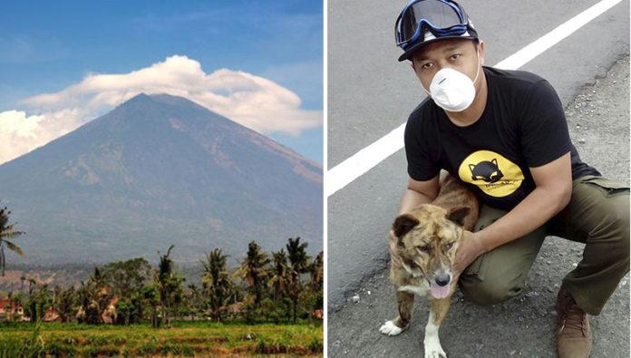 Animales rescatados del peligro por volcán en Indonesia