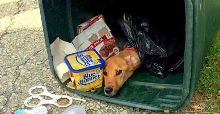 Arrojó a su perrita a la basura al mudarse