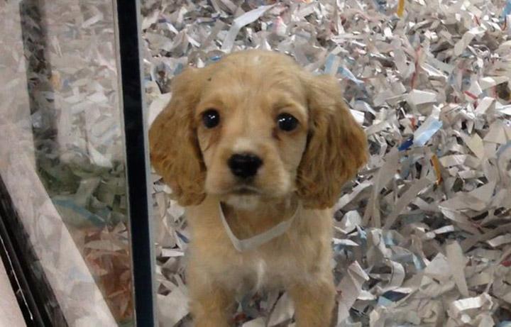 California prohíbe venta de animales en tiendas de mascotas