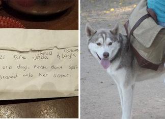 Dejan dos huskies abandonados en el parque para perros