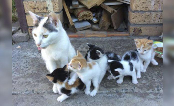 Gata sin hogar mantuvo sanos y salvos a sus gatitos en la calle