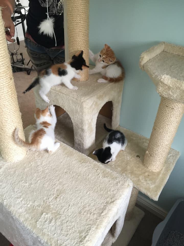Gatos bebés