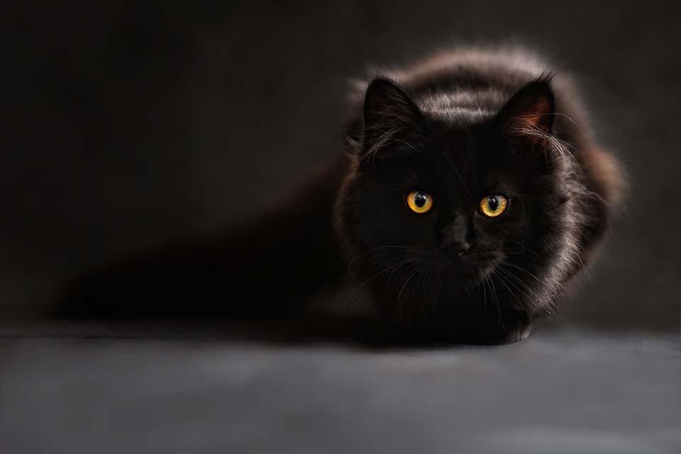 Hidrofobia felina