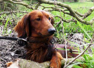 Hombre condenado a prisión por maltratar a un perro