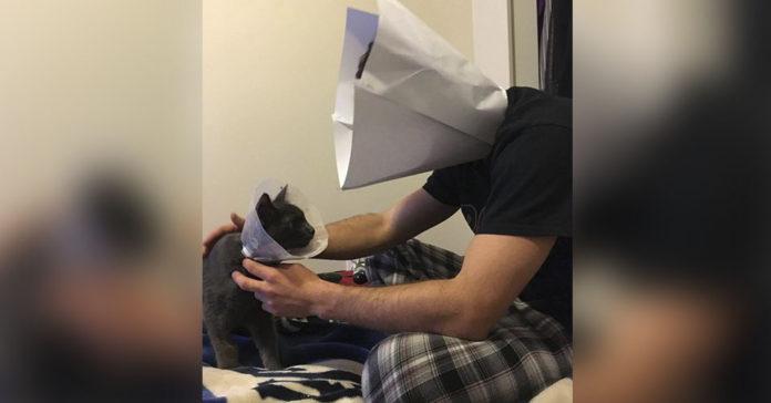Hombre se pone el cono de la verguenza para que su gatito no se sienta solo