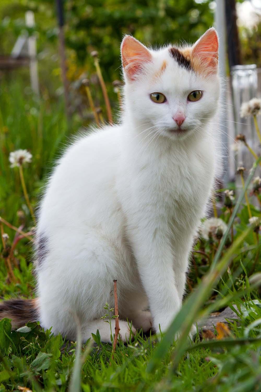 Leucemia en gatos