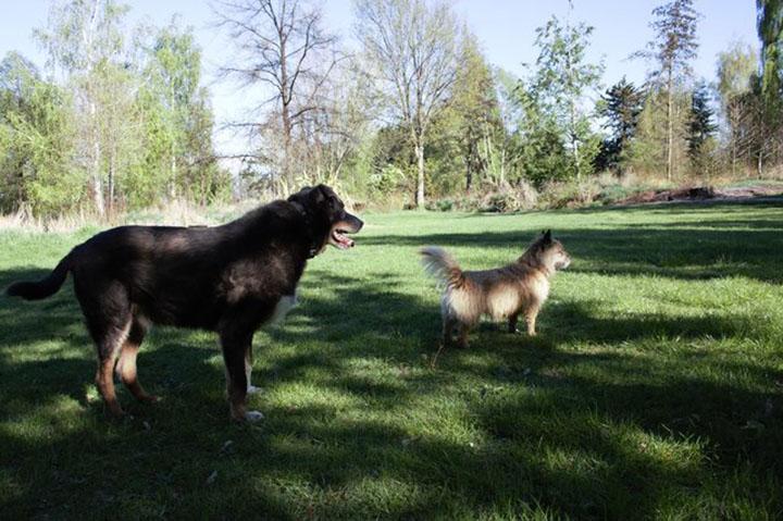 Maddy y Louie
