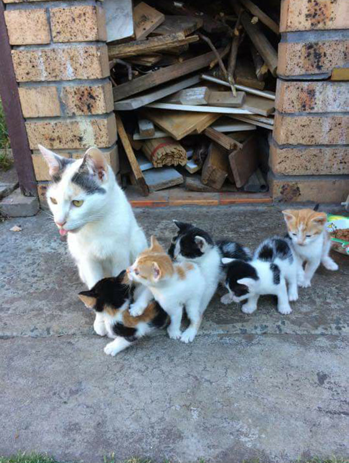 Madre mantiene vivos a sus bebés