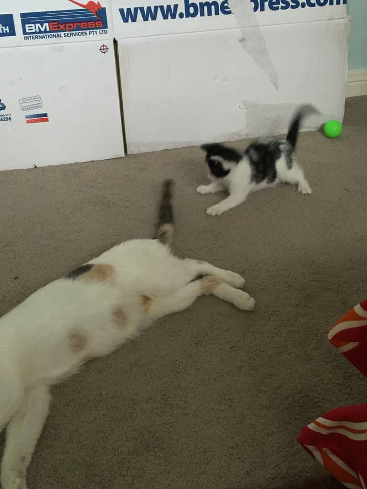 Mamá gata y su gatito