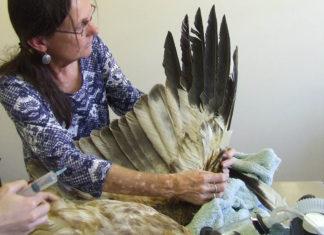 Mujer repara el ala de un águila