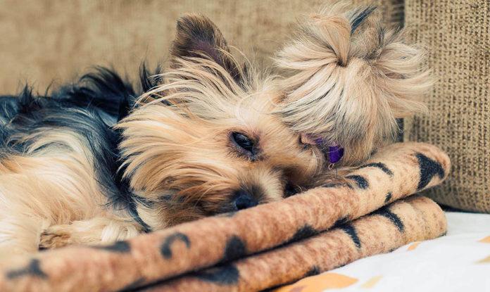 Mujer tiene el corazón roto al morir su perro