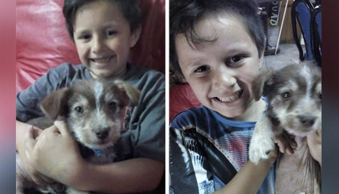 Niño salvó a un perro maltratado y lo adoptó