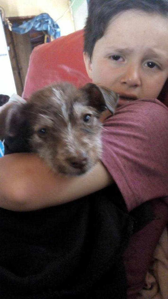 Nicolás y el perrito