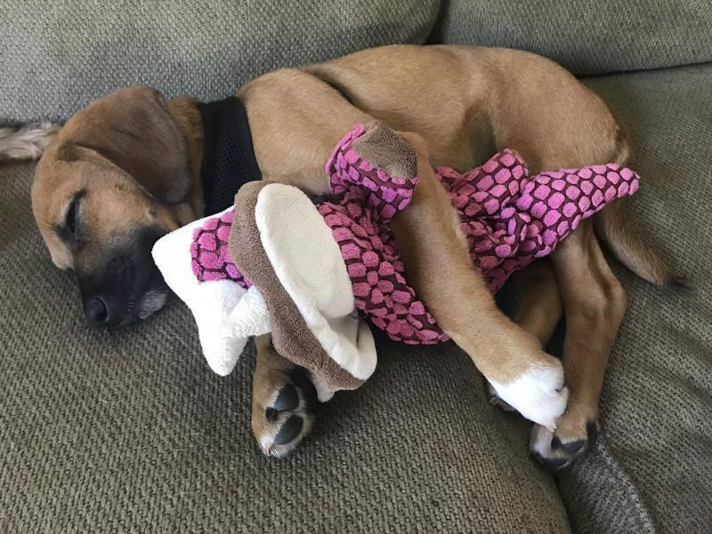 Oakley dormido