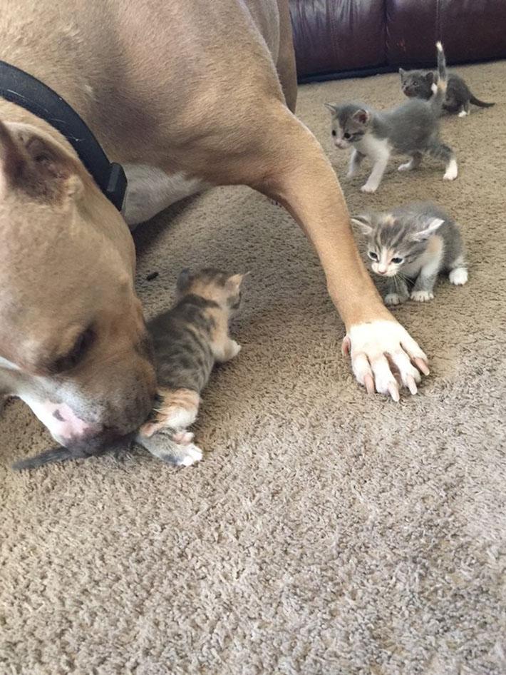 Ozzy ama a los gatitos