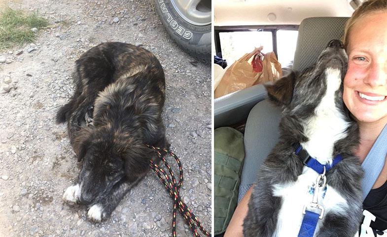 Pareja encuentra cachorro en viaje por carretera